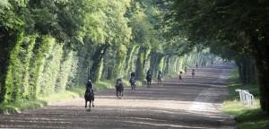 Horse racing Chantilly